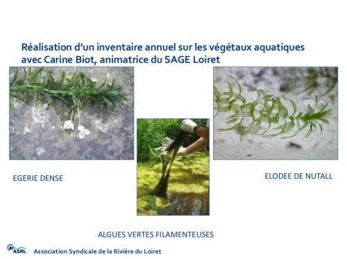 Les algues invasives...