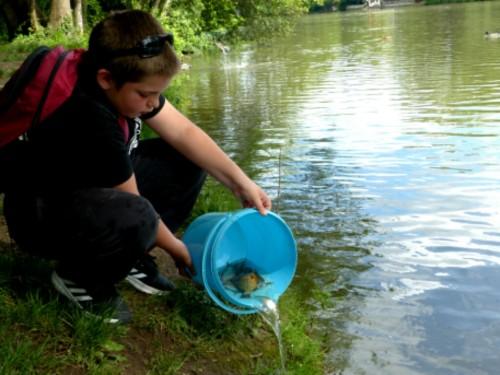 Remise à l'eau de tous les poissons après la pesée...